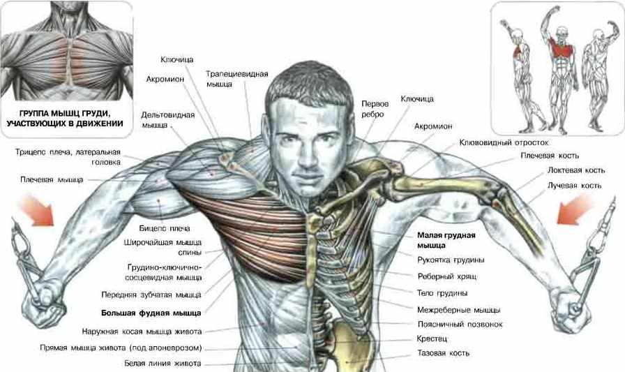 Как быстрее накачать грудные мышцы в домашних условиях
