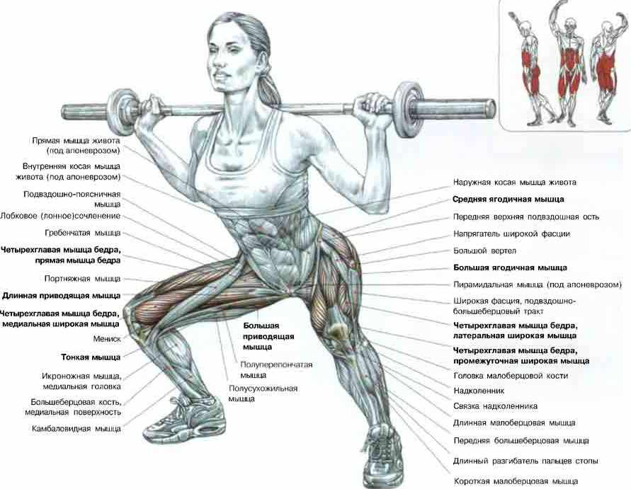 работу над всеми мышцами,