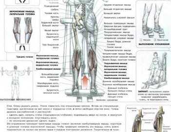 Десять упражнений для тренировки ваших ног - FixBody: спорт ...