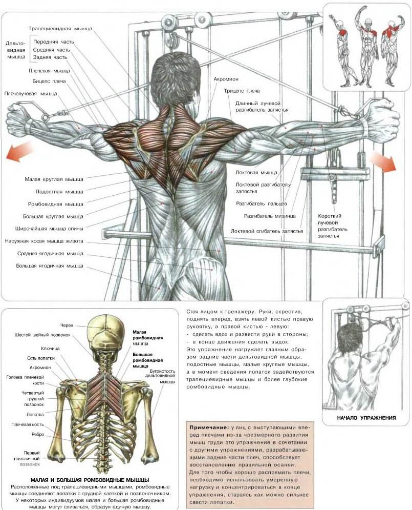 Как сделать чтобы плечи