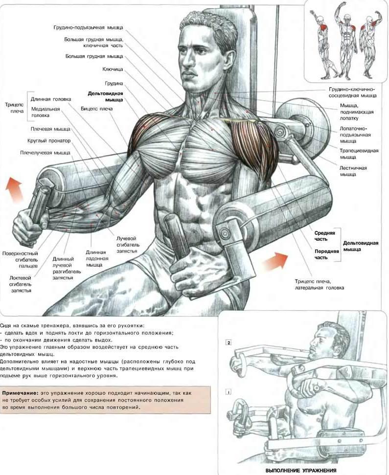 Упражнения для плеч в домашних условиях для мужчин видео