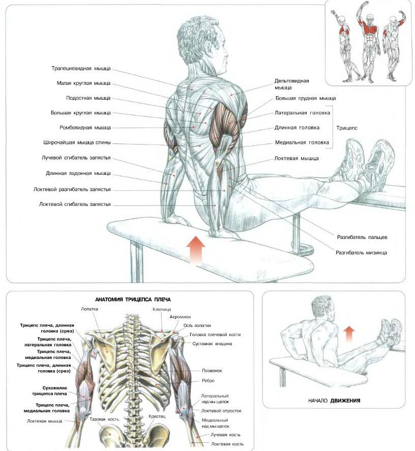 Упражнения как накачать мышцы в домашних условиях