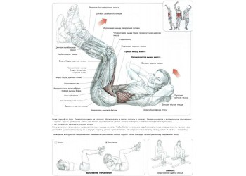Скручивания с поднятыми ногами