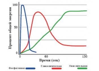 В кроссфите различают три энергетических системы обеспечения мышечной деятельности.
